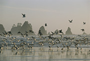 Rock Groups Photo Posters - A Flock Of Gulls On A Beach With Sea Poster by Melissa Farlow