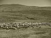 Ghost Town Prints - A Flock of Sheep 4 Print by Philip Tolok