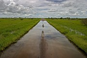 Floods Prints - A Flooded Road Through Green Fields Print by Randy Olson