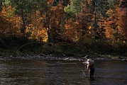 Autumn Scenes Photos - A Fly-fisherman Lays Out A Perfect Cast by Paul Nicklen