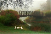 Landscape Framed Prints Prints - A Foggy Morning Print by Tom York