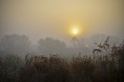 Golden Marsh Framed Prints - A Foggy Sunrise Framed Print by Carolyn Marshall