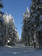 Winter Roads Photos - A Forest Path by FeVa  Fotos