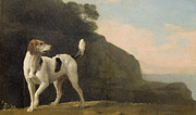 Dog Walking Prints - A Foxhound Print by George Stubbs