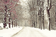 Ohio Photo Originals - A fresh snow storm by Tony  Bazidlo