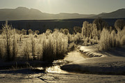 Gros Ventre Posters - A Frosty Gros Ventre Morning Poster by Amy Gerber
