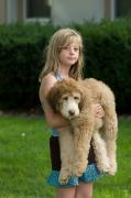 Goldendoodle Prints - A Girl Holds Her Goldendoodle Puppy Print by Joel Sartore