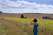 Woman 2011 Framed Prints - A girl walking in a field of sunflowers Framed Print by Andrew  Michael