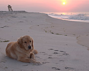 Hamptons Photos - A Golden Morning by Robin Ziegelbaum