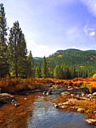 Colorado Stream Prints - A Golden Path Print by Terril Heilman