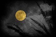 Supermoon Photos - A Golden Supermoon by Dorothy Menera