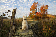Westie Terrier Photos - A Good Place To Rest by Karen Spychalski-Sullins