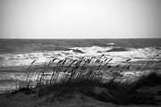 Sea Grass Posters - A Gray November Day at the Beach Poster by Susanne Van Hulst
