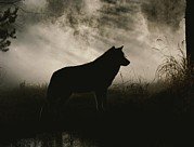 Canines Photo Framed Prints - A Gray Wolf, Canis Lupus, In Silhouette Framed Print by Jim And Jamie Dutcher