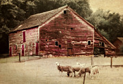 Barn Yard Digital Art Prints - A Grazy Day Print by Julie Hamilton