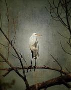 Great Egret Posters - A Great Egret Poster by Al  Mueller