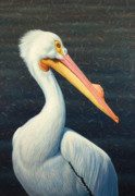 Seabird Metal Prints - A Great White American Pelican Metal Print by James W Johnson
