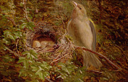 Nest Paintings - A Greenfinch at its Nest by William Hughes