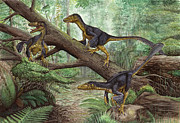 Dromaeosaurid Prints - A Group Of Balaur Bondoc Print by Sergey Krasovskiy