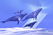 Isolated Digital Art - A Group Of Whales Head by Corey Ford