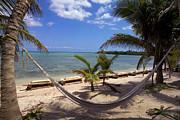 Atlantic Beaches Framed Prints - A hammock between palm Framed Print by Raul Touzon