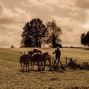 Amish Farmer Photos - A Hard Days Work by Trish Tritz