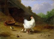 Farmyard Animals Posters - A hen with her chicks Poster by Eugene Joseph Verboeckhoven