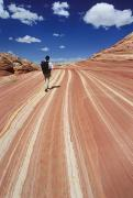 Grand Staircase Escalante Posters - A Hiker Explores The Sandstone Patterns Poster by Bill Hatcher
