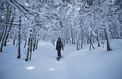 Forests And Forestry Art - A Hiker Passes Through A Snowy Forest by Bill Curtsinger