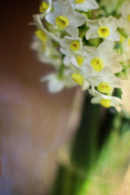 Yellow Flowers Photos - A Hint of Spring by Rebecca Cozart