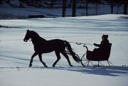 Sleigh Ride Art - A Horse-drawn Sleigh Ride At Twilight by Ira Block