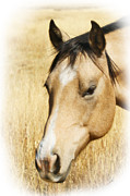 Pistol Photo Posters - A Horse Poster by Ernie Echols