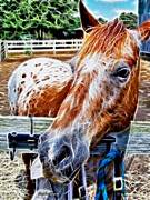 Horse Stable Digital Art Posters - A Horse of Course Poster by Stephen Younts