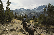 Ansel Adams Framed Prints - A Horse Packer In A High Mountain Framed Print by Gordon Wiltsie