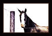 Pet Digital Art Originals - A Horse Portrait by Sherrie Conkel