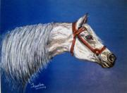 Animal Pastels Pastels Prints - A Horse With No Name Print by Fareeha Khawaja