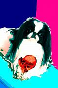 Japanese Chin Framed Prints - A Japanese Chin and His Toy Framed Print by Kathleen Sepulveda