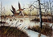 Waterfowl Drawings - A Jerry Yarnell Study by Jimmy Smith