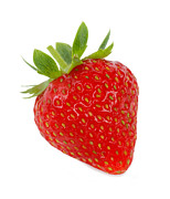 Healthy Eating Art - A Juicy, Ripe, Tempting Strawberry by Rosemary Calvert