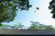 Multi-coloured Art - A Kite In The Air by Lawren Lu
