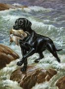 Artists And Artisans Prints - A Labrador Retriever Climbs From Surf Print by Walter A. Weber