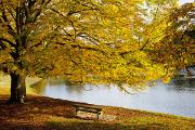 Colors Of Autumn Framed Prints - A Large Tree And Bench Along The Water Framed Print by John Short