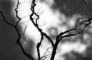 Dias Dos Reis - A Leafless Shadow