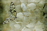 Butterfly On Flower Prints - A Lighter Touch Print by Lois Bryan