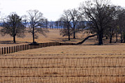 Fence Post Photos - A Lined Pasture by Joy Tudor
