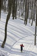 Large Scale Posters - A Little Boy Country Skiing On A Trail Poster by Skip Brown
