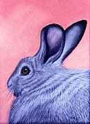 Rabbit Pastels Posters - A Little Grey Hare Poster by Jan Amiss