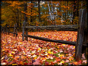 Best Of Red Carpet Prints - A Log Fence in a Carpet of Fall Leaves Print by Chantal PhotoPix