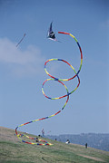 Kites Metal Prints - A Long-tailed Kite Soars Metal Print by Stephen Sharnoff