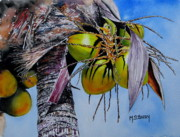 Coconuts Framed Prints - A Lovely Bunch of Coconuts Framed Print by Maria Barry